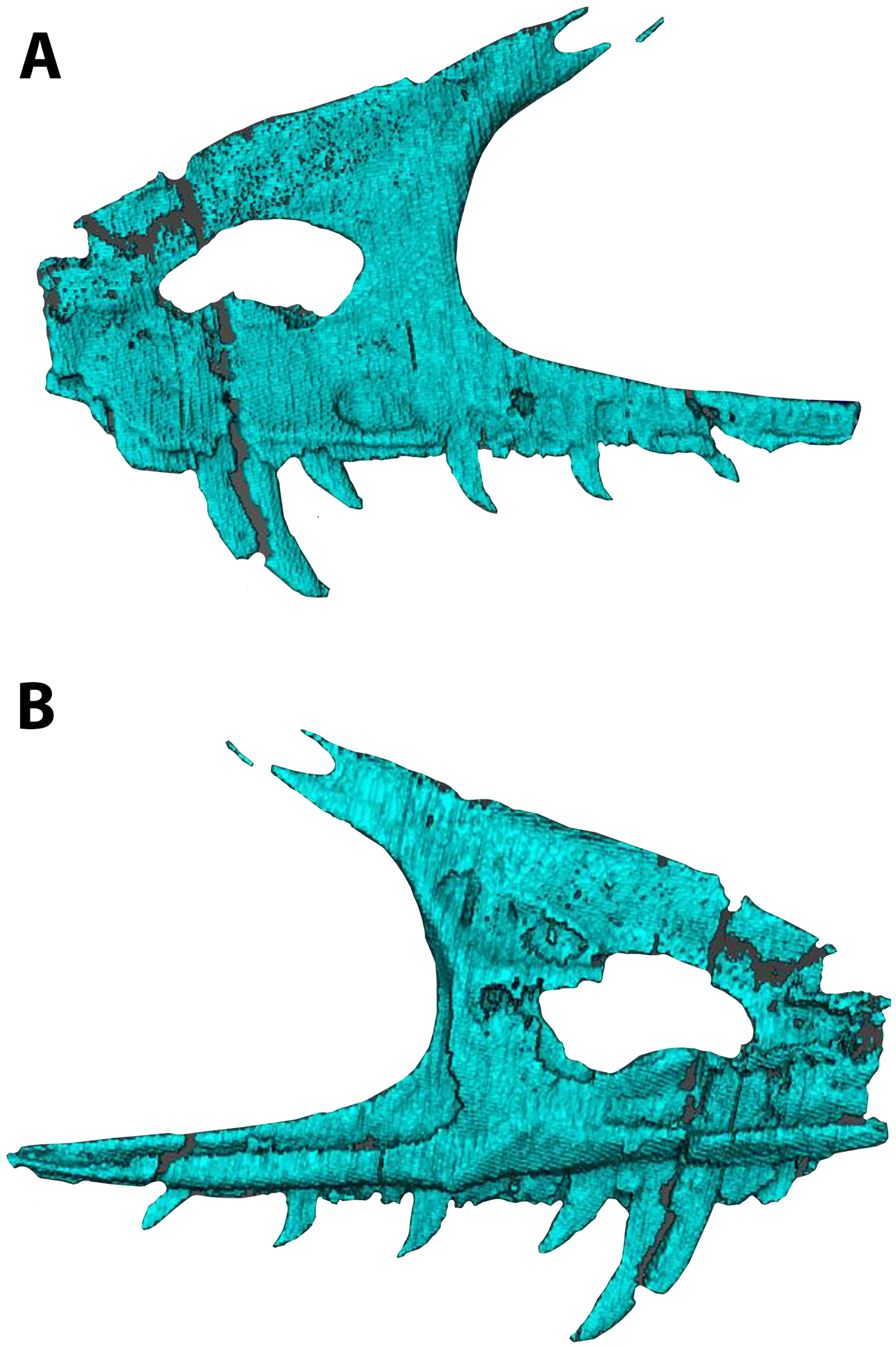 A new paravian dinosaur from the Late Jurassic of North