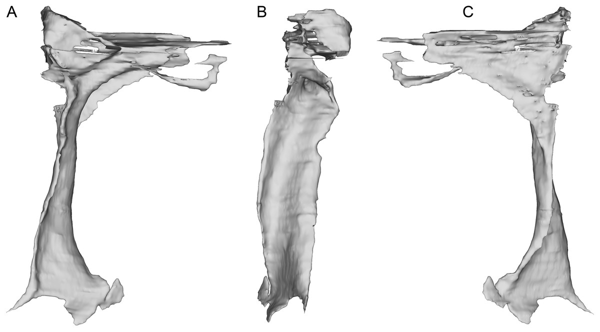 A new paravian dinosaur from the Late Jurassic of North America