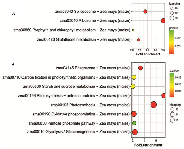 Enriched pathways of protein species between Whs and Grs of chimeric leaves as determined by KEGG analyses.