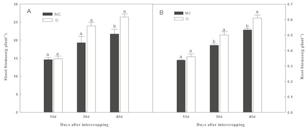Effect of intercropping with green garlic on cucumber shoot (A) and root (B) biomass after interplanting on days 15, 30 and 45.