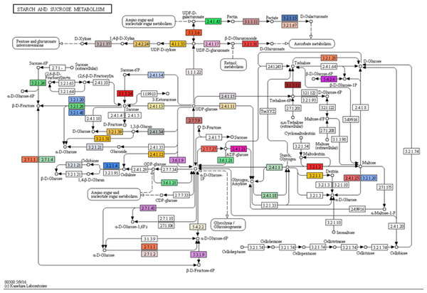 Mapping of assembled transcripts onto the starch and sucrose metabolism (map00500) taken from KEGG.