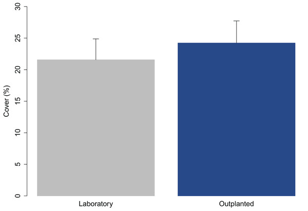 Percent cover of C. amentacea (average + SE) on tiles when leaving the controlled growth conditions (laboratory) and at the time of positioning (outplanting) at the receiving site (72 h later).