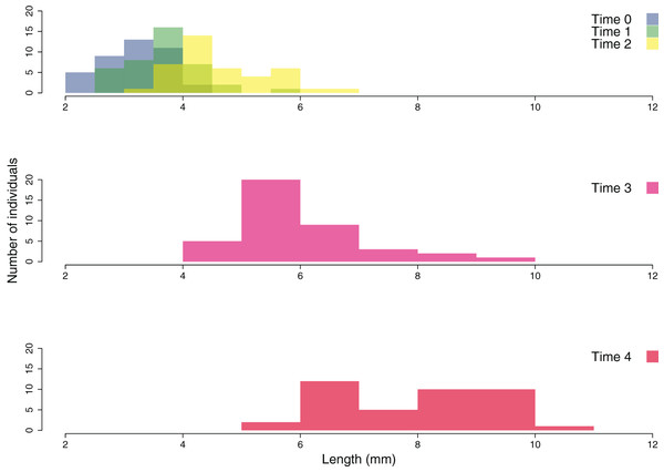 Size frequency distribution of the outplanted juveniles of Cystoseira amentacea over time.