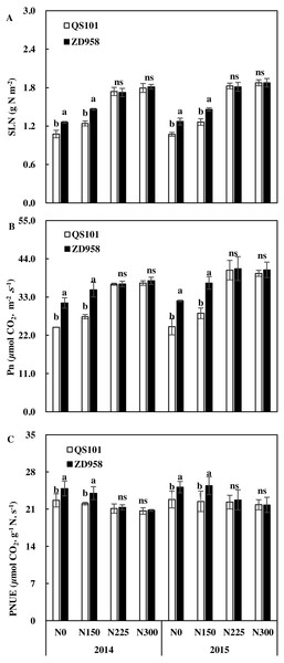Specific leaf nitrogen (SLN, A), net photosynthetic rate (Pn, B) and photosynthesitic nitrogen use efficiency (PNUE, C) of two maize hybrid varieties under four nitrogen rates at anthesis in 2014 and 2015.