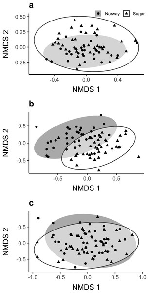 Plots of (A) Bacterial, (B) Fungal, and (C) AMF communities associated with the roots of sugar and Norway maples based on 16S, ITS and 18S regions (respectively) using NMDS scaling.