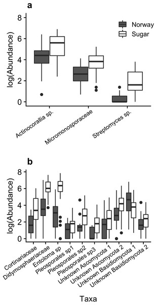 Boxplots of median bacterial (A) and fungal (B) taxa that differed significantly in abundance among maple species (ANCOM, P < 0.05).