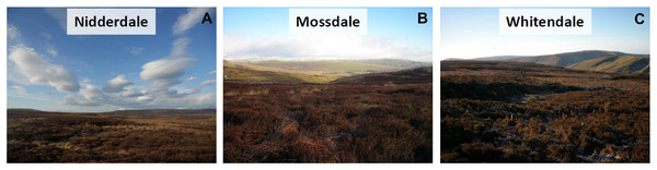 Site condition pictures to provide an upland blanket bog context.