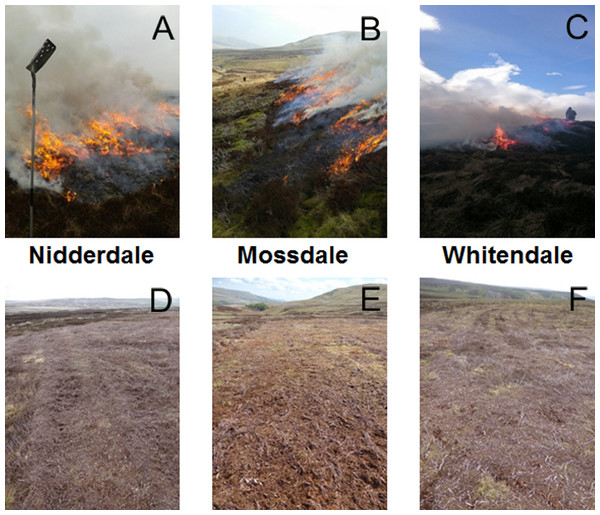 Site pictures providing a grouse moor management context.