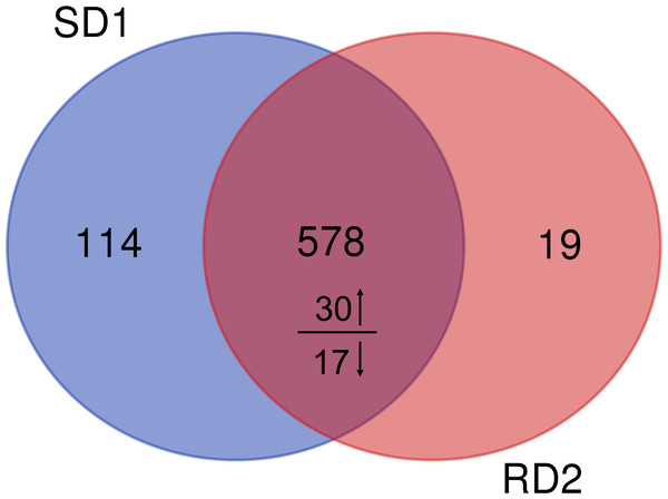 Venn diagram of identified proteins from sika deer and red deer groups.