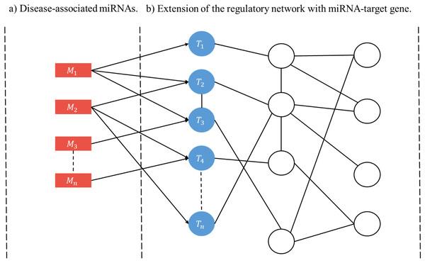 Schematic construction of disease-specific miRNA regulatory network (RRN).