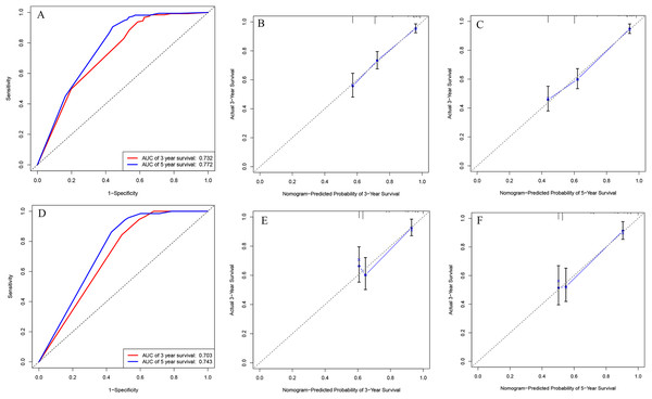 ROC curves and calibration plots of the nomogram in training and validation cohorts.