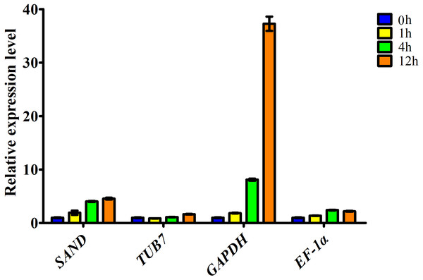Relative expression level of ascorbate oxidase gene in garlic clove exposed to salt treatment for 0, 1, 4, and 12 h.