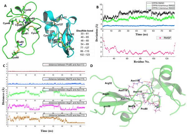 Homologous modeling structure of EPPIN after molecular dynamics stimulation.
