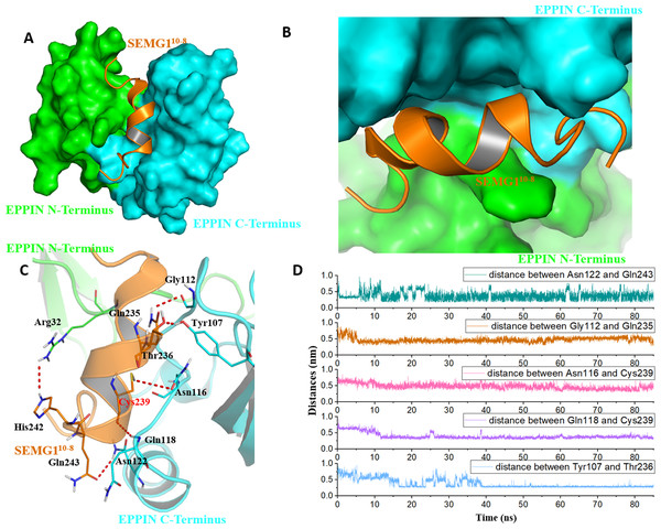 The binding interaction of EPPIN and SEMG110-8.