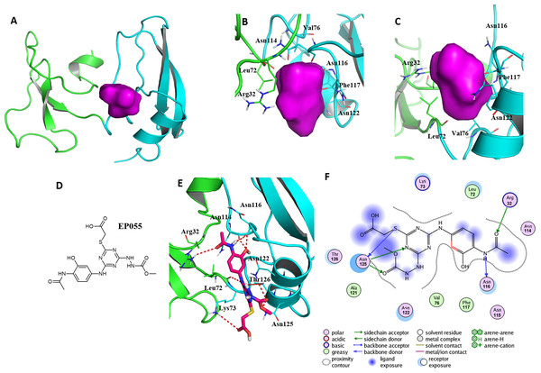 A reasonable potential binding pocket of EPPIN and the molecular docking of the reported ligand EP055 with EPPIN in this pocket.