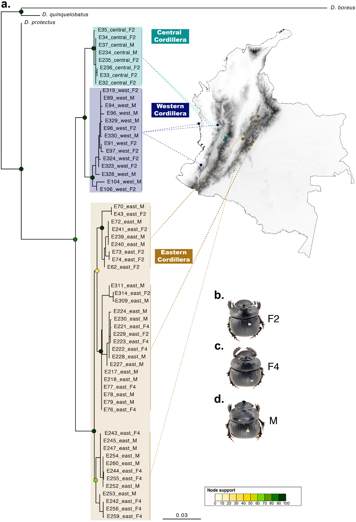 Taxonomic reassessment of the genus Dichotomius (Coleoptera ...