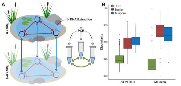Average dissimilarities between PCR replicates, spatial replicates, and temporal replicates.