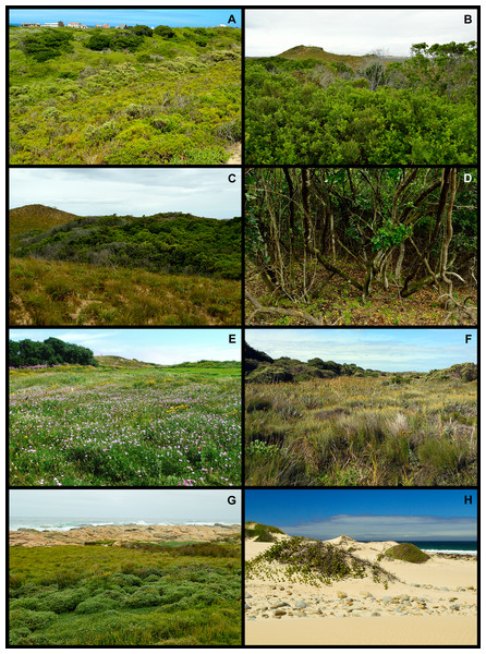Examples of the biomes that occur in the Holocene dune landscape around Cape St Francis in the southeastern Cape Floristic Region.