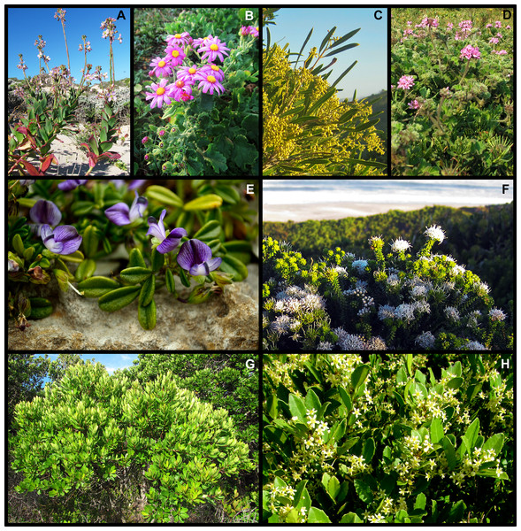 Examples of widespread dune endemic plant species from the Holocene dune landscape around Cape St Francis in the southeastern Cape Floristic Region.