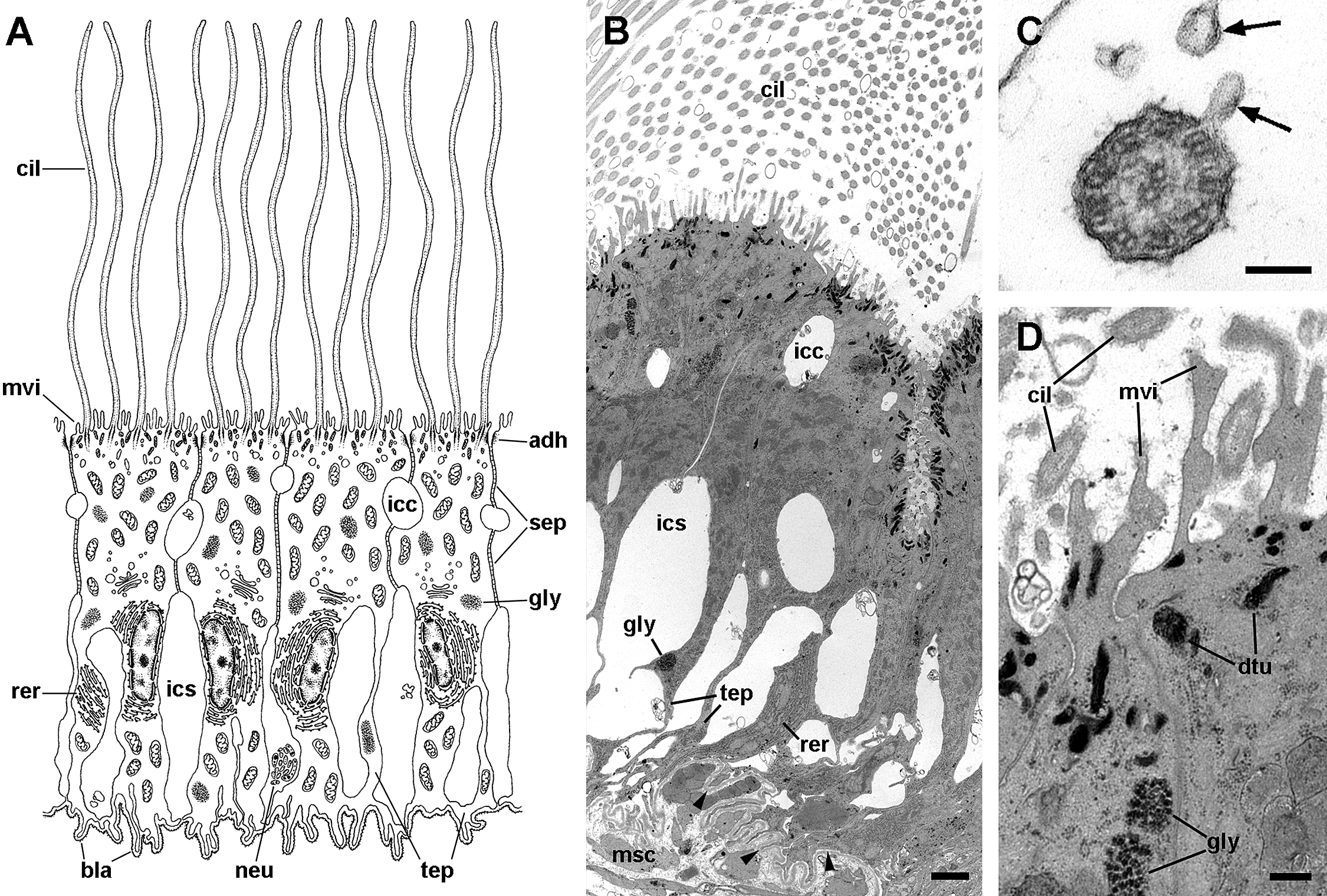Functional and evolutionary perspectives on gill structures
