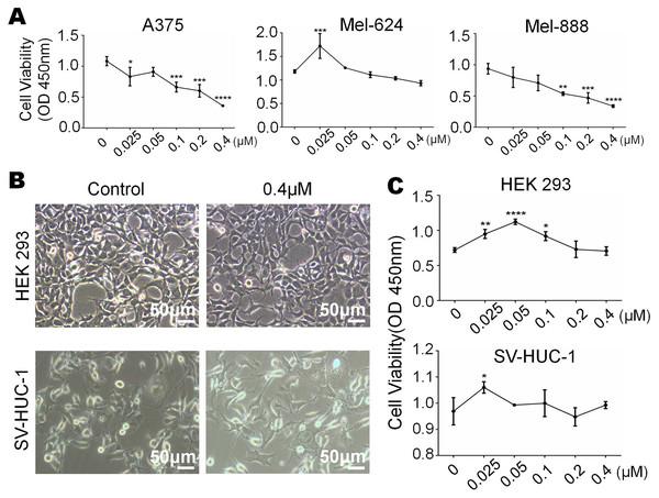 Monensin is non-cytotoxic to normal control human cells at the same dose.