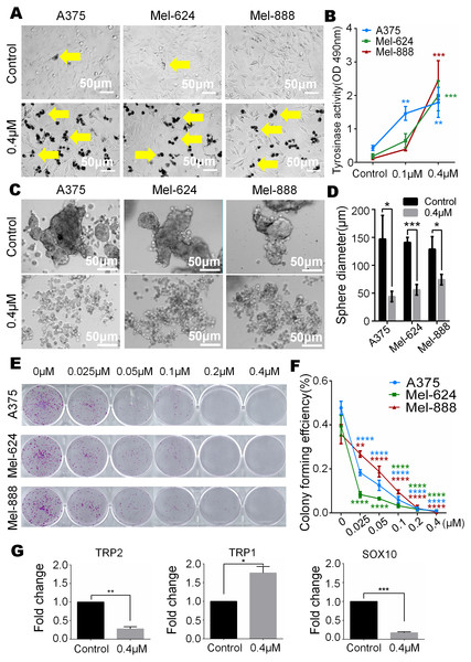 Monensin caninduce terminal differentiation and inhibit pluripotency of melanoma stem cells.