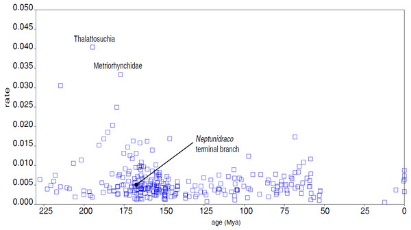 Divergence rate of the Crocodylomorph branches.