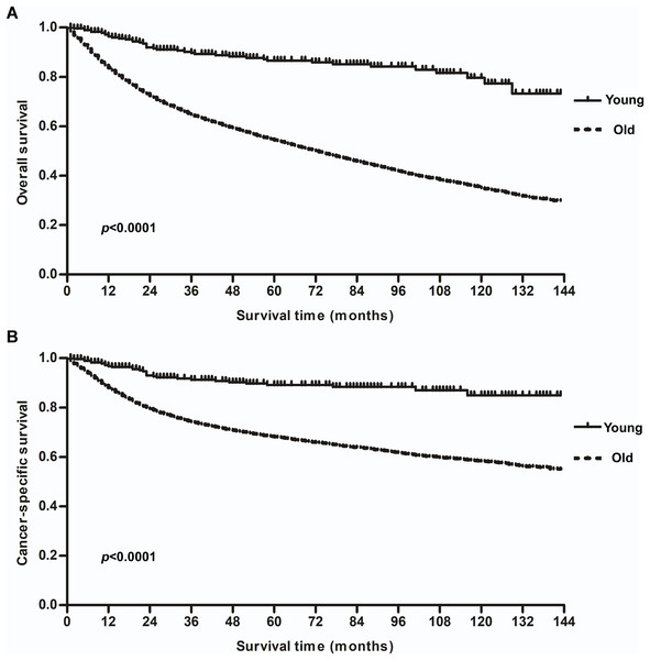 Kaplan–Meier overall survival (OS) and cancer-specific survival (CSS) curves for patients with laryngeal squamous cell carcinoma stratified by age (40 years).