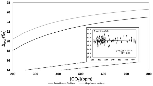 Carbon isotope fractionation values (Δleaf) vs. [CO2] for Thuja and growth chamber dicots.