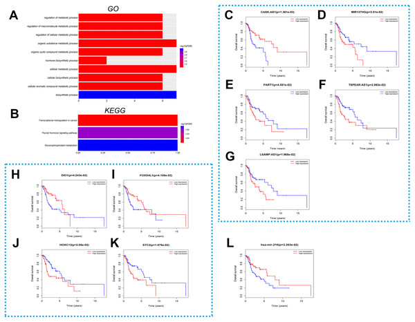 Function and survival analysis of RNAs in the ceRNA network.
