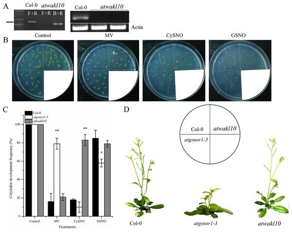 The response of atwakl10 plants to oxidative and nitrosative stress.