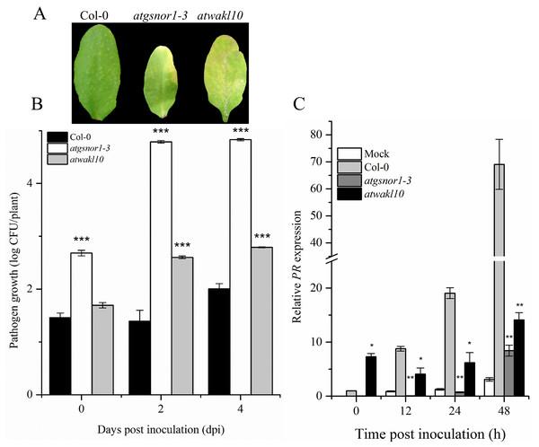 AtWAKL10 negatively regulates basal defense.
