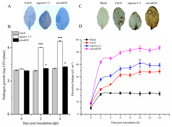 AtWAKL10 positively regulates effector-triggered immunity.