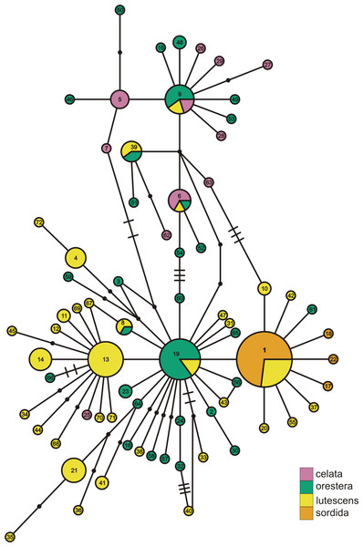 ND2 haplotype network with subspecies population grouping.