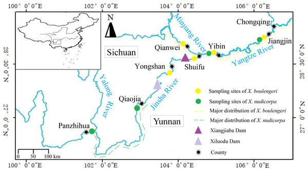 Sampling locations for X. boulengeri and X. nudicorpa within the upper reaches of Yangtze River Basin.