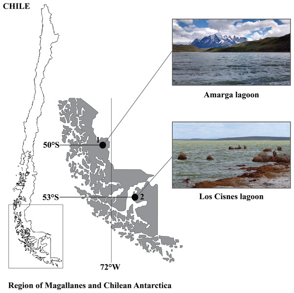 Geographical distribution of the study sites in the Region of Magallanes and Chilean Antarctica.