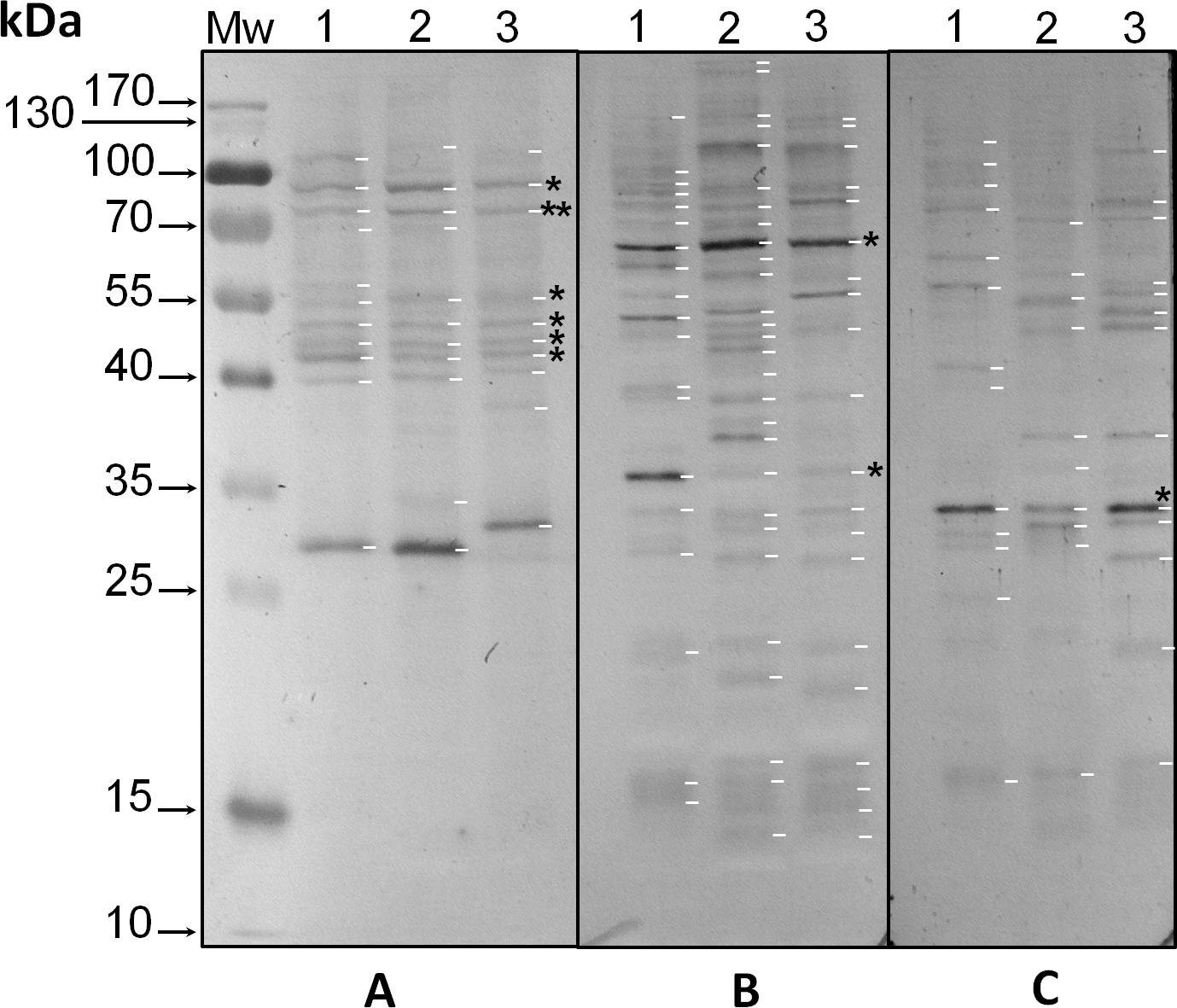Phosphorylation/dephosphorylation response to light stimuli of