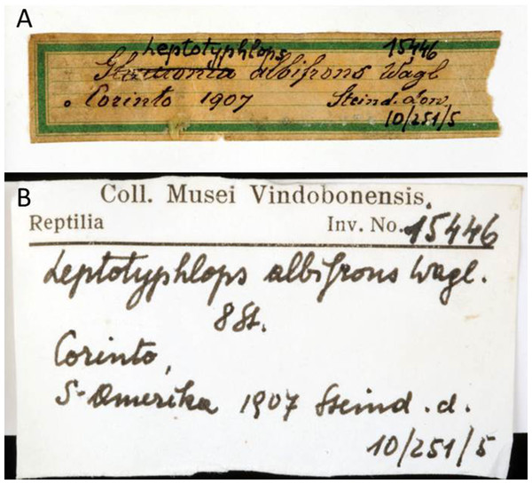 Handwritten labels of NMW 15446.