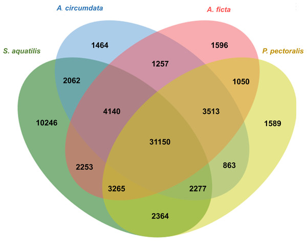 Venn diagram of annotated unigenes among four firefly species.