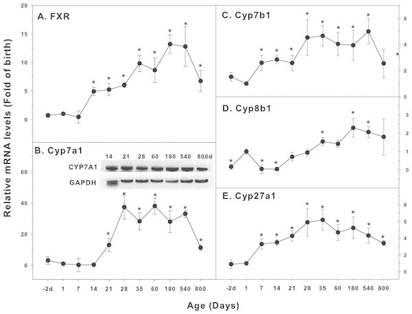 Age-related expression of CYP-7 family gene/proteins in livers of male rats.