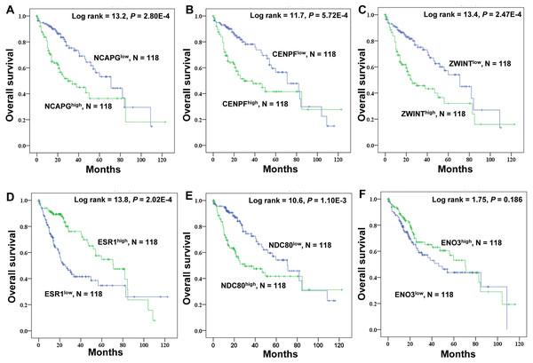 Kaplan–Meier survival analysis of 118 liver cancer samples using the TCGA database.