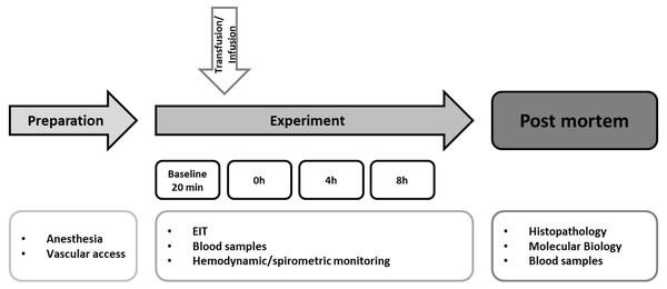 Experimental flow chart.