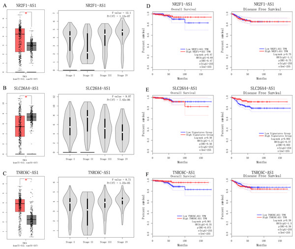 (A–C) Analyses of pivotal lncRNAs expression in tumor vs. normal tissues and in different tumor stages. (D–F) Overall and disease-free survival analyses of hub lncRNAs.