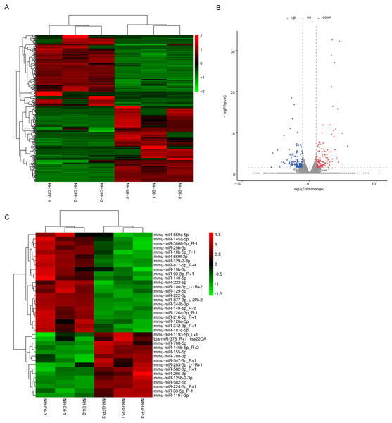 Analysis of differentially expressed genes (DEGs) and miRNAs in NH-E6 cells compared with NH-GFP cells.