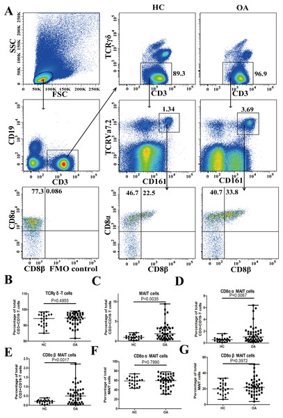 Assessment of circulating MAIT cells in patients with OA and healthy controls.