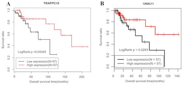 Kaplan–Meier curve of lncRNA TMEM51-AS1 ceRNA related mRNAs.