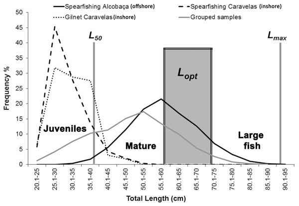 Length–frequency for S. trispinosus landings (2011–2013) in the Abrolhos Bank, Brazil.