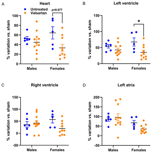 Effects of a 9-week treatment with valsartan on cardiac hypertrophy development caused by severe volume overload from AR.