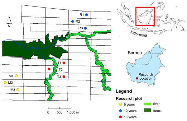Map of study sites in oil plantation in Central Borneo, Indonesia.