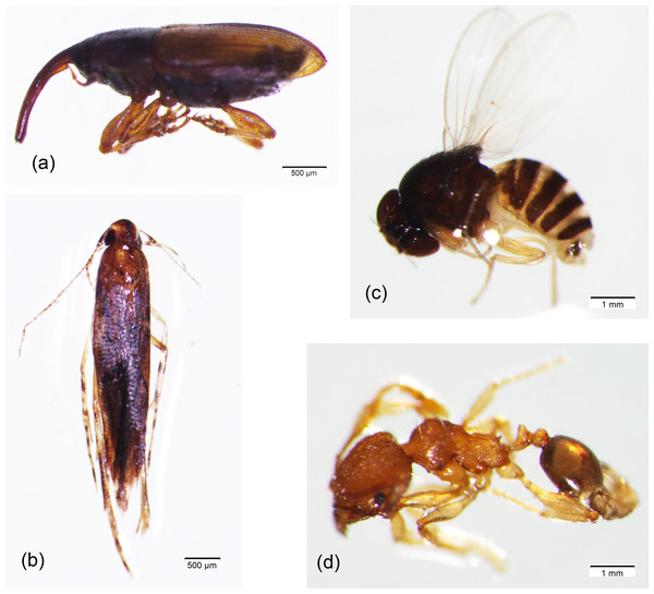 The most dominant species of flower-visiting insects in oil palm plantation in Central Borneo, Indonesia.